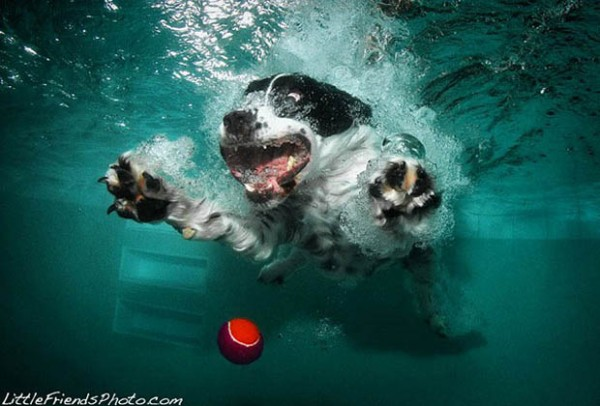 Underwater_dogs_Photographs_Seth_Casteel_CubeMe2